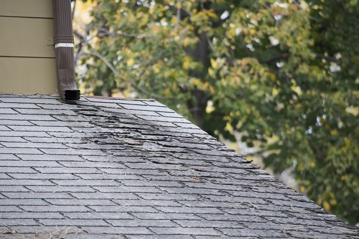 Roof Shingle Damage or Normal Wear and Tear?